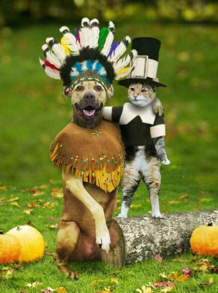 deguisement-d-halloween-pour-chat-et-chien