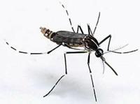comment loigner les moustiques. Black Bedroom Furniture Sets. Home Design Ideas
